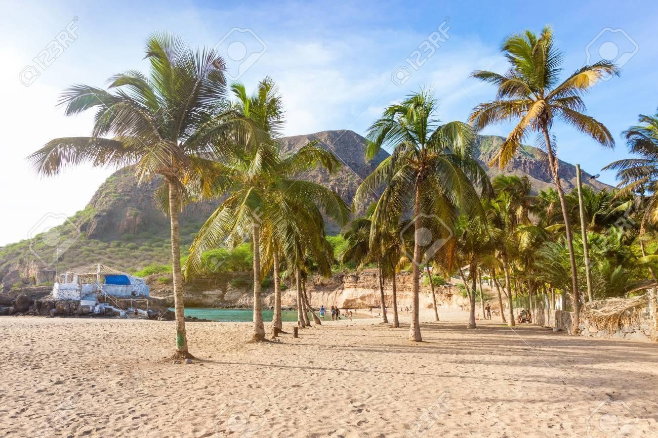 Coconut trees in Tarrafal beach in Santiago island in Cape Verde - Cabo Verde - 45340580