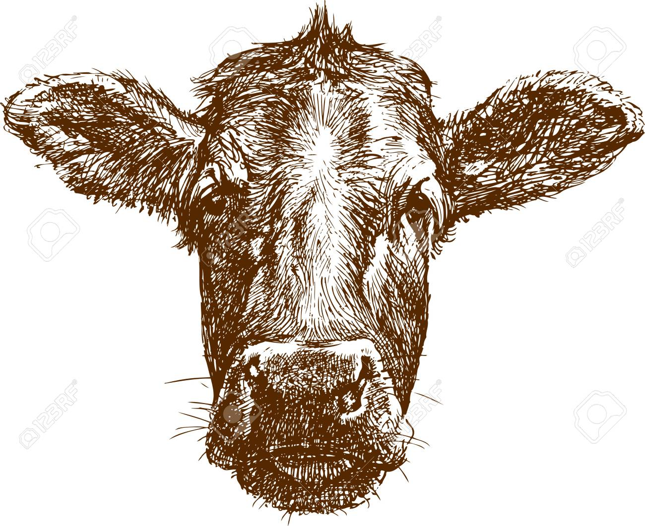 The vector drawing of a face of cow in style of sketch