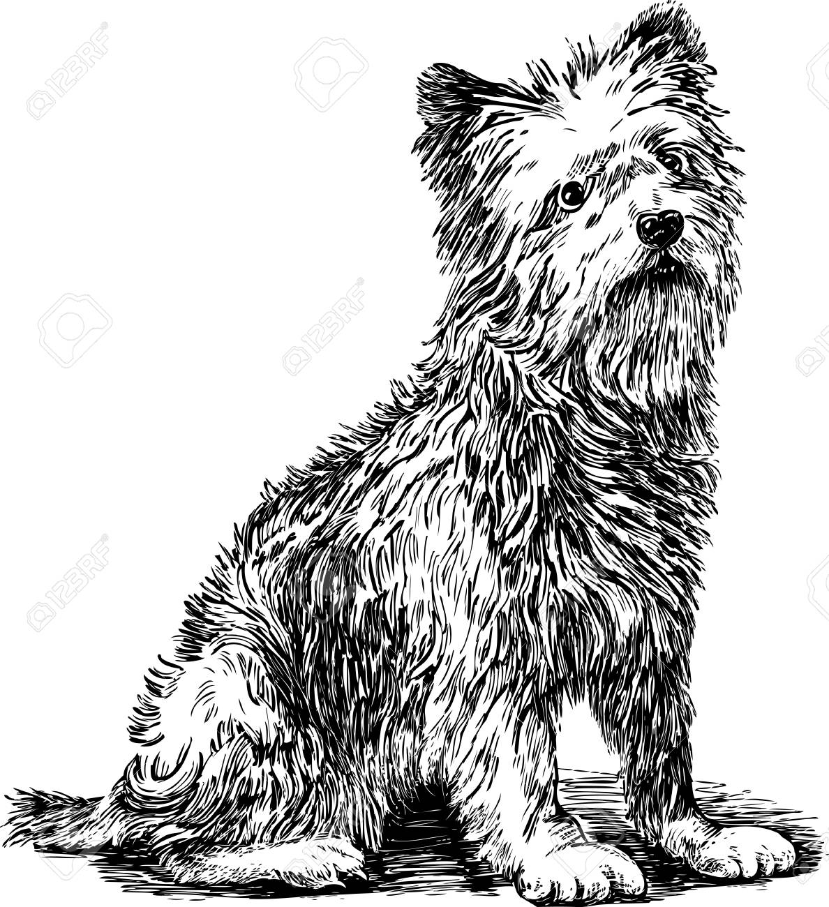 Hand drawing of a sad terrier