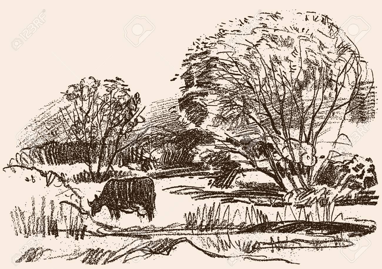 Pencil drawing of a rural landscape with a grazing cow