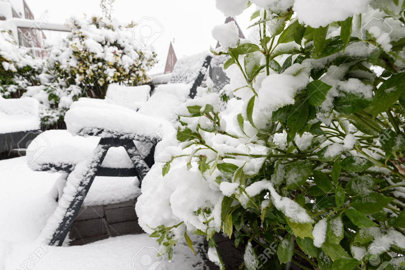 Backyard, green garden plant under snow with furniture in backdround Banque d'images - 95846157
