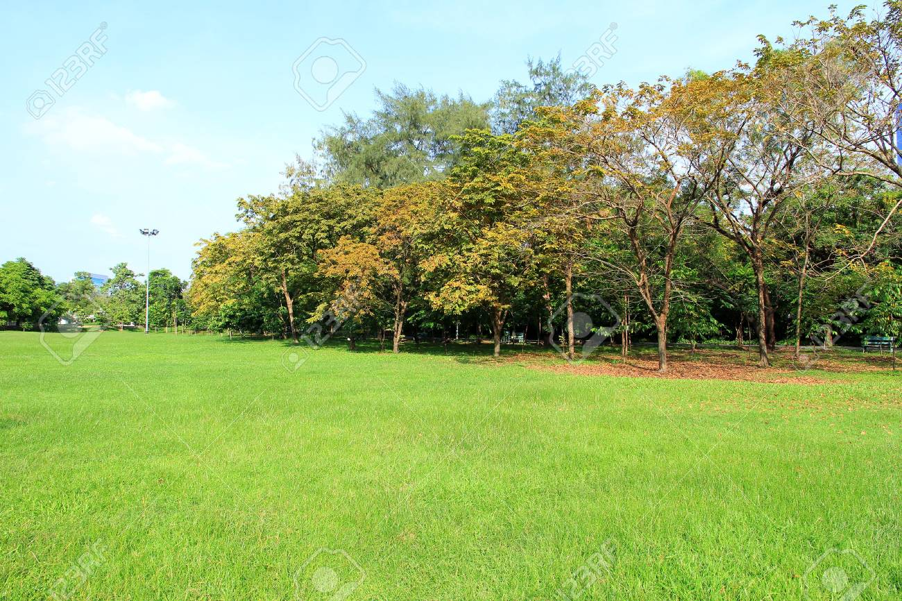 Grass, Tree Leaves Begin To Change Color In The Summer. Stock Photo ...