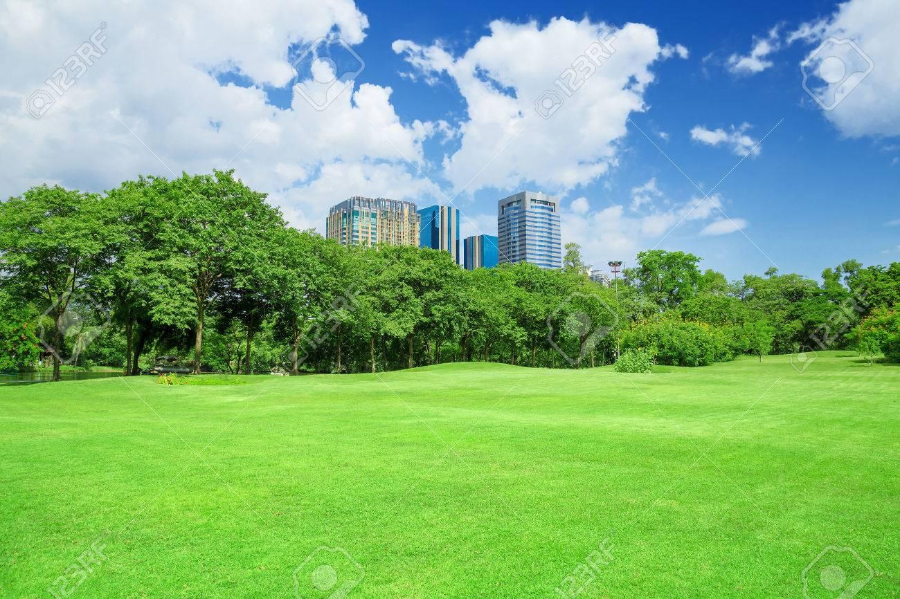green grass field in big city park - 46755280