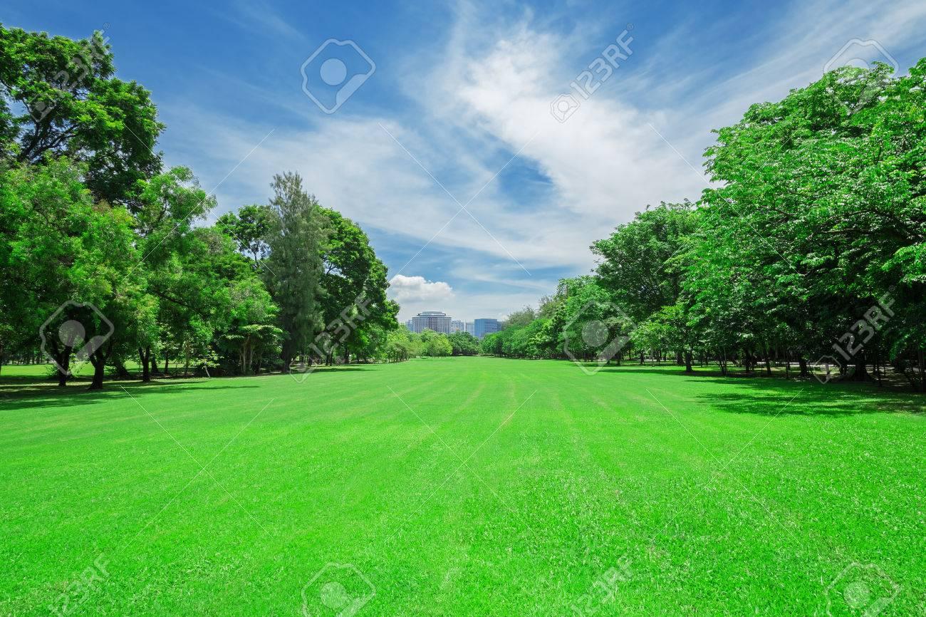green grass field in big city park - 66477015