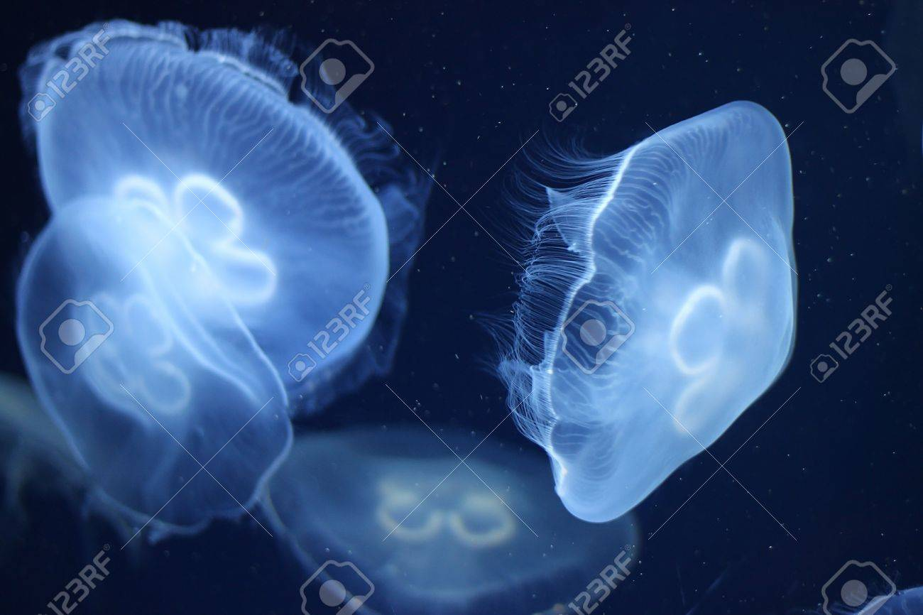 photo of a jelly fish in blue ocean water in the dark 5 stock