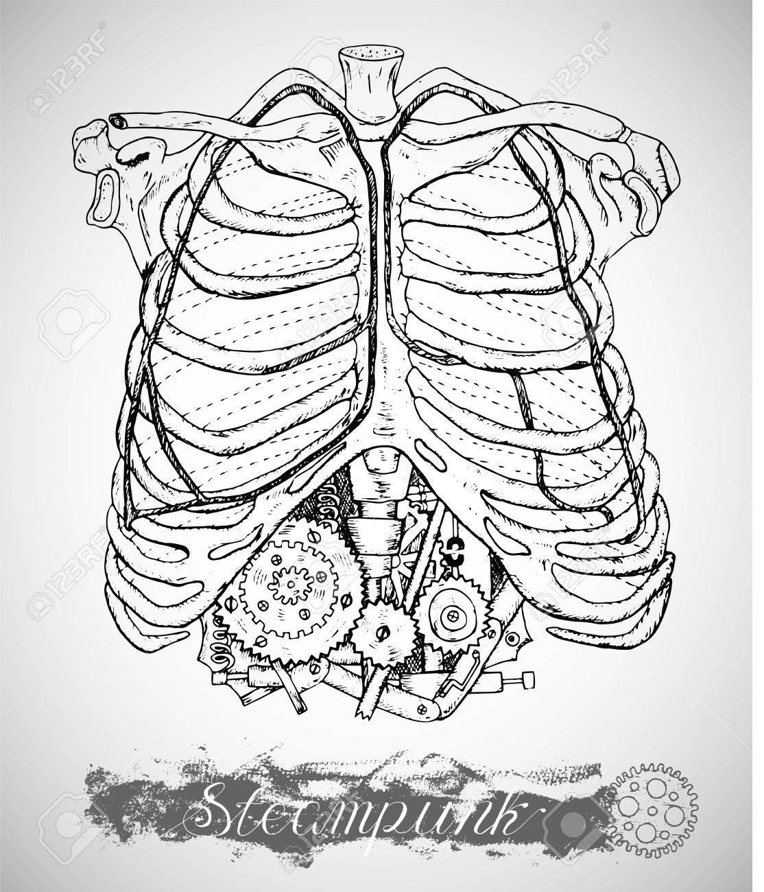 Pecho Anatomía Humana Con El Mecanismo De La Vendimia En Las ...