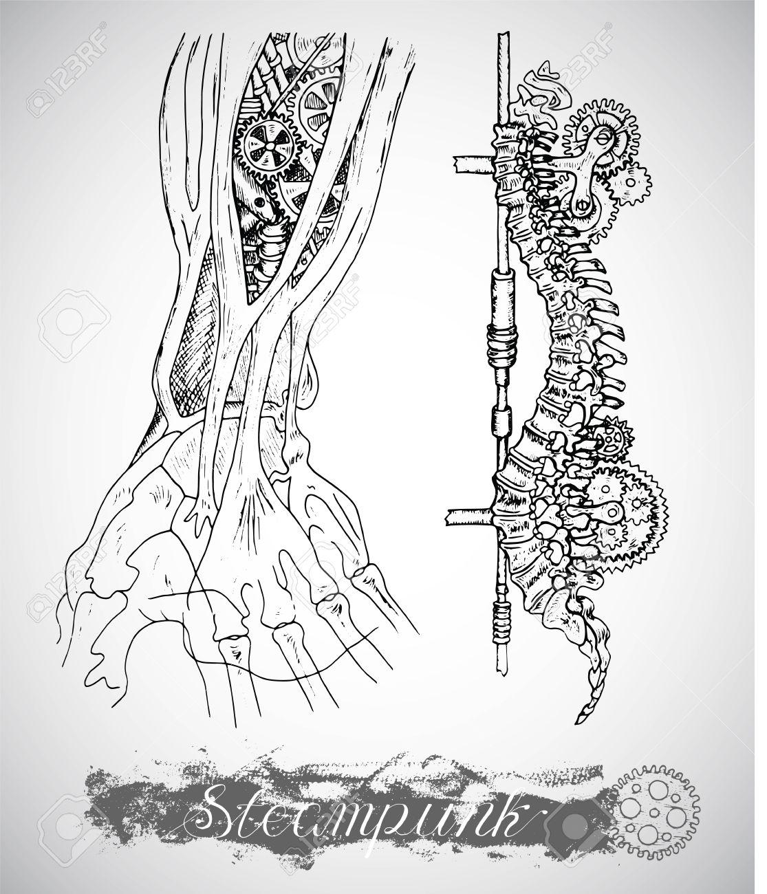 Anatomie Des Menschen Hand Und Rückgrat Mit Vintage-Mechanismus In ...