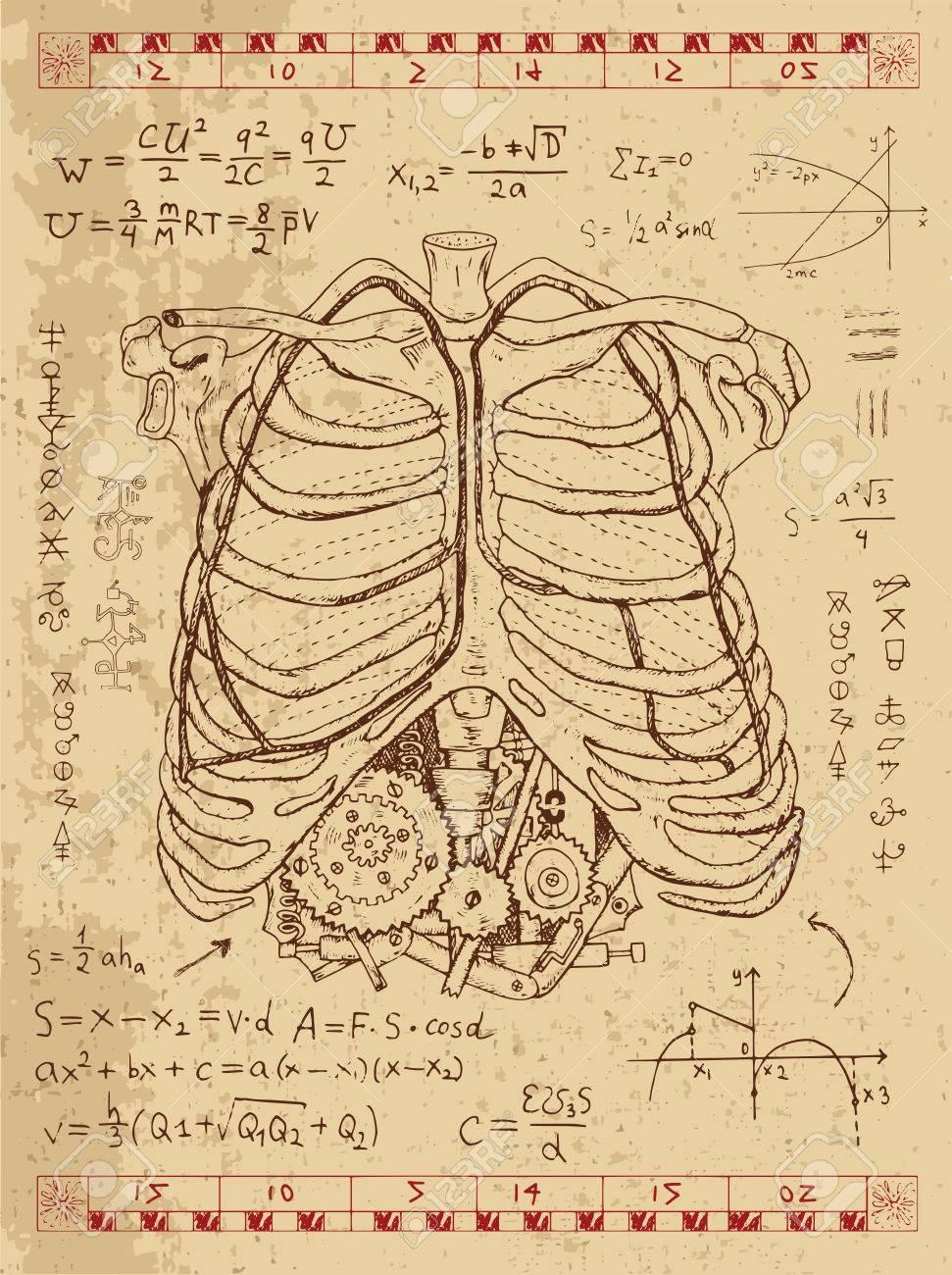 Gráfico Fijado Con El Pecho De La Anatomía Humana, Fórmulas ...