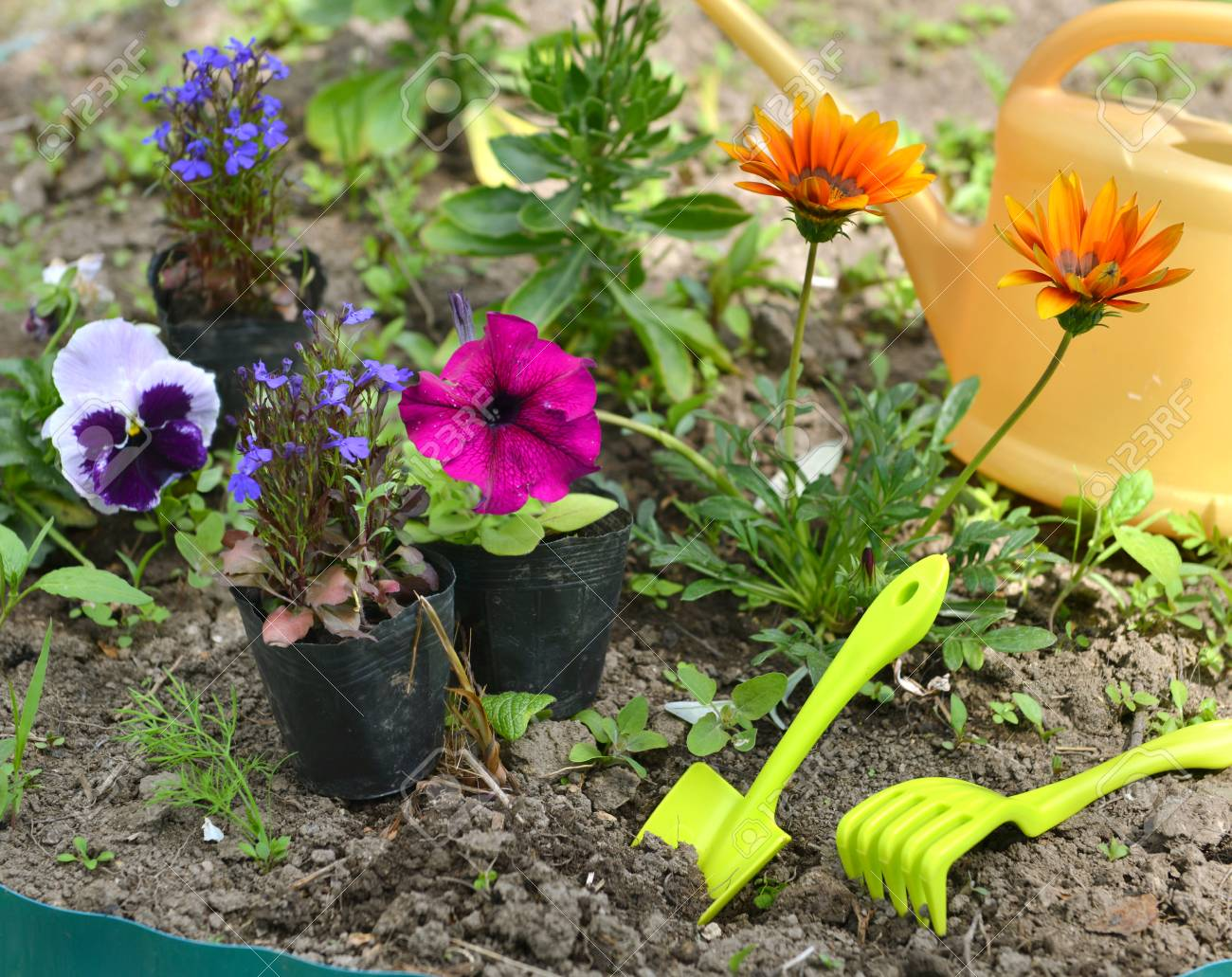 Garden Still Life With Petunias Pansy Flowers And Tools In Flower