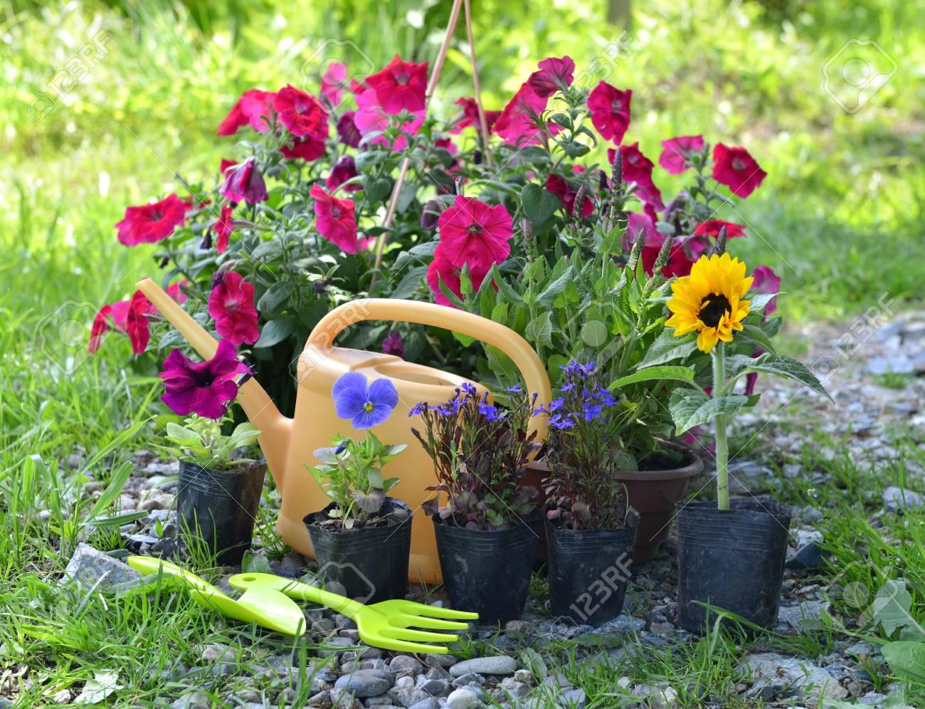 schönes gartenstillleben mit petunie und sommerblumen beim pflanzen