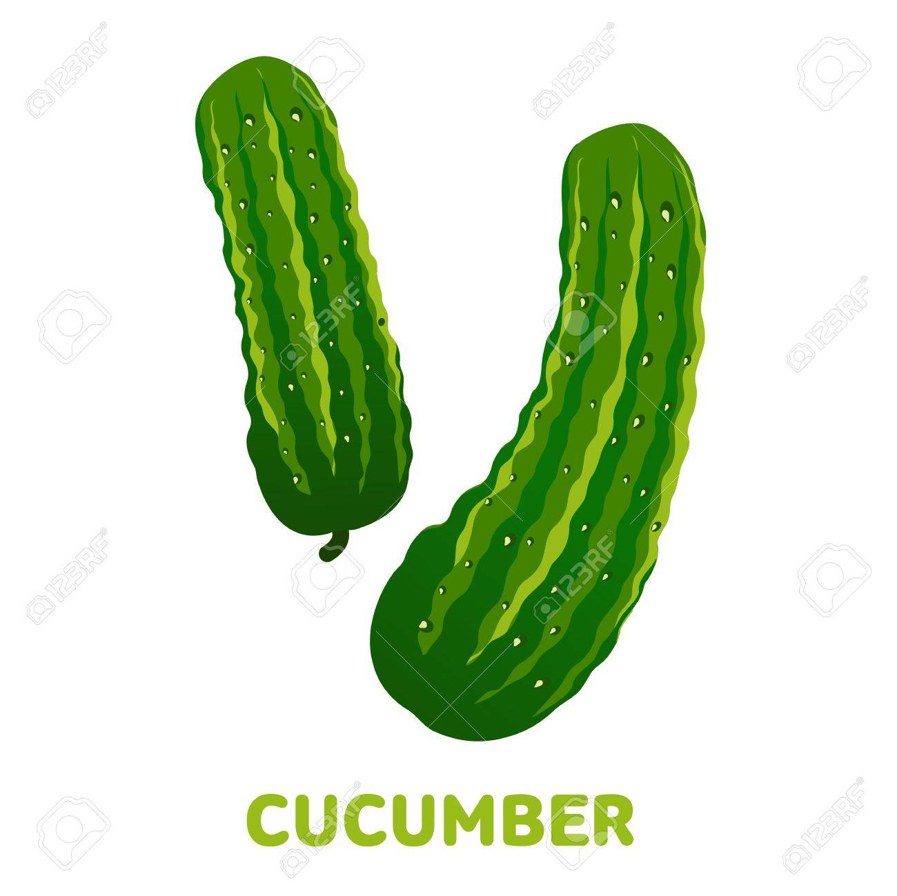 Fresh cucumber flat illustration. Cucumber for farm market, vegetarian salad recipe design. Cucumber badges, labels. Vector illustration isolated on white background - 81897026