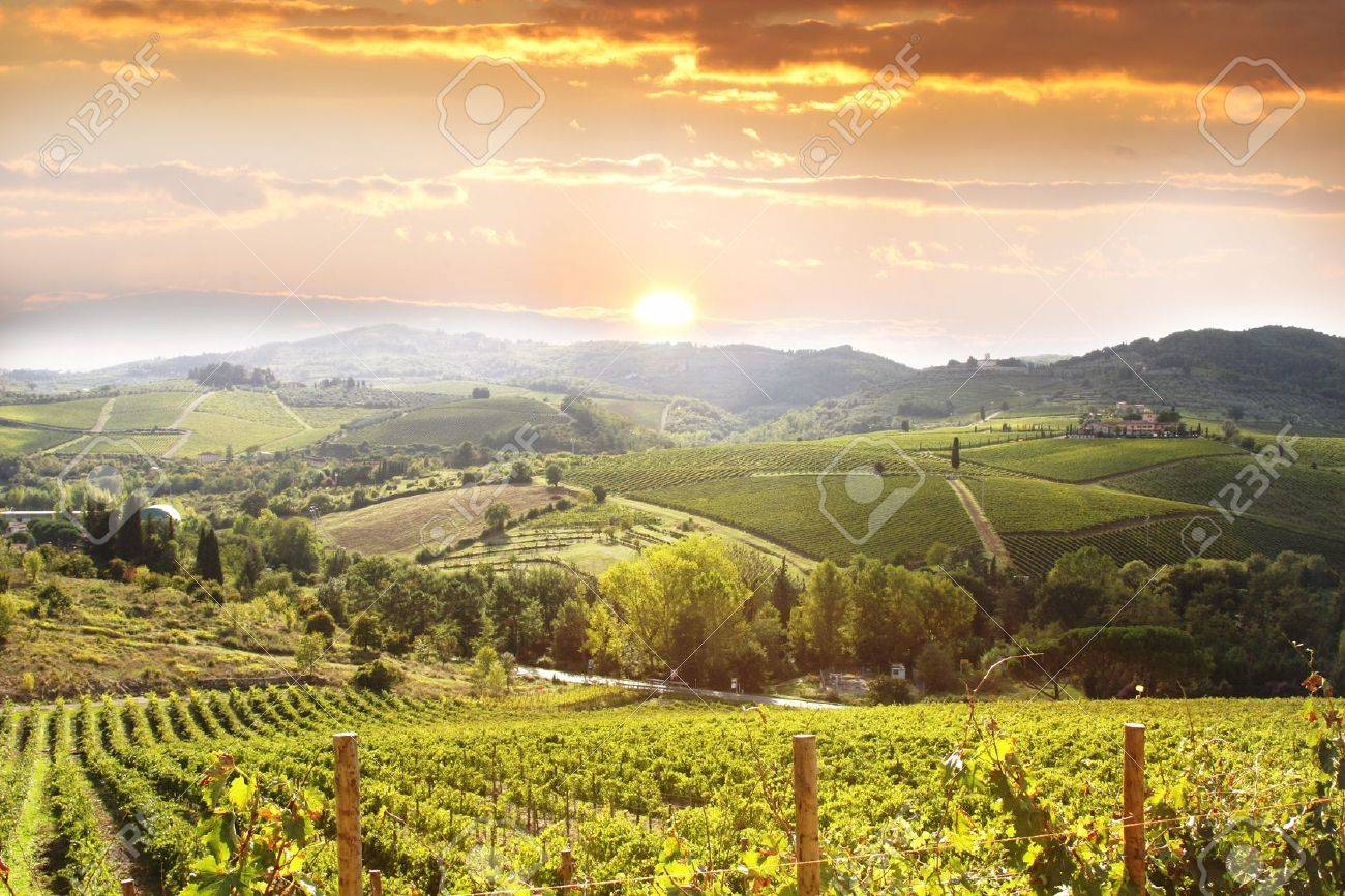 Chianti vineyard landscape in Tuscany, Italy Stock Photo - 12305684