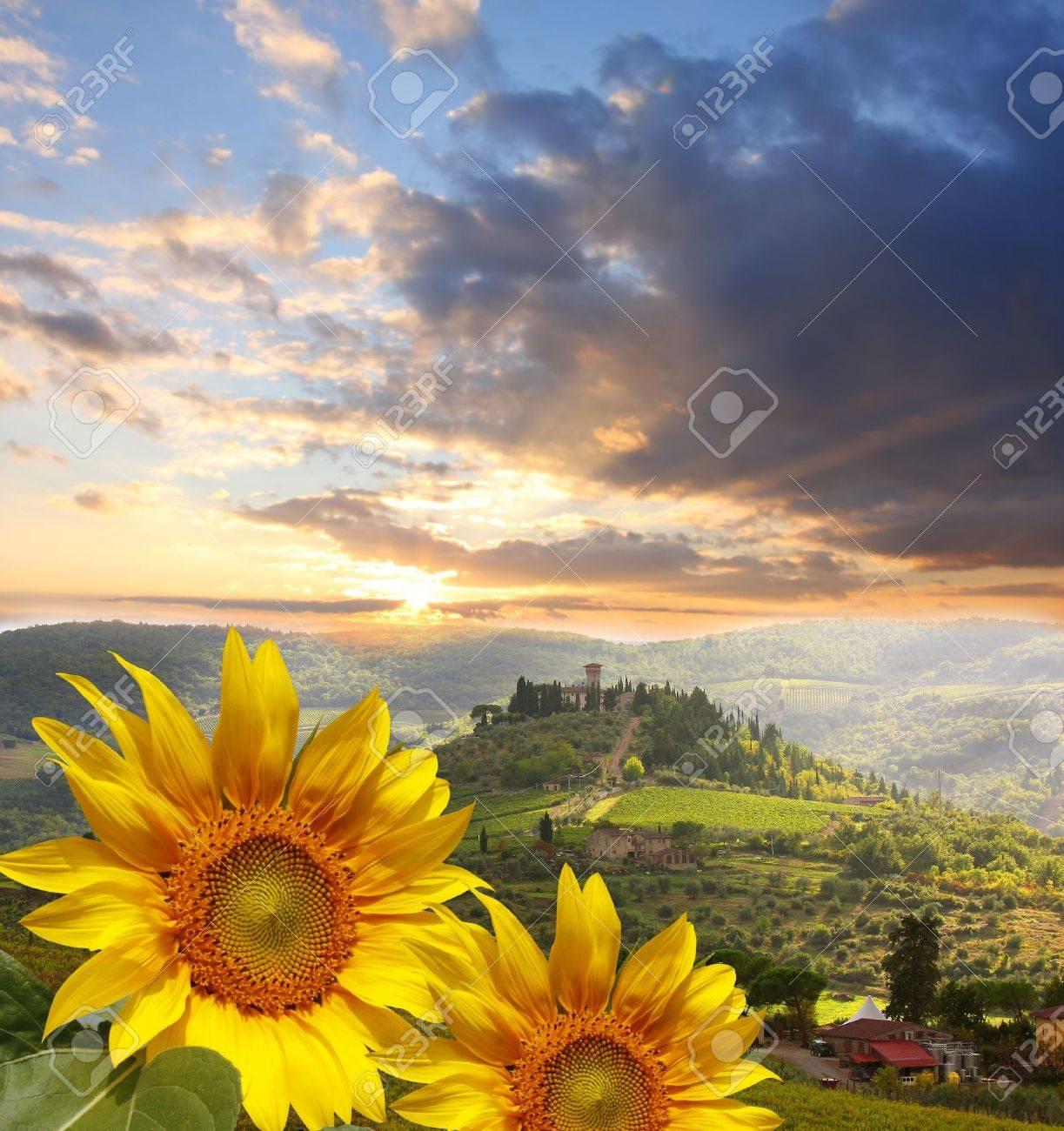 Chianti vineyard landscape in Tuscany, Italy - 15541081