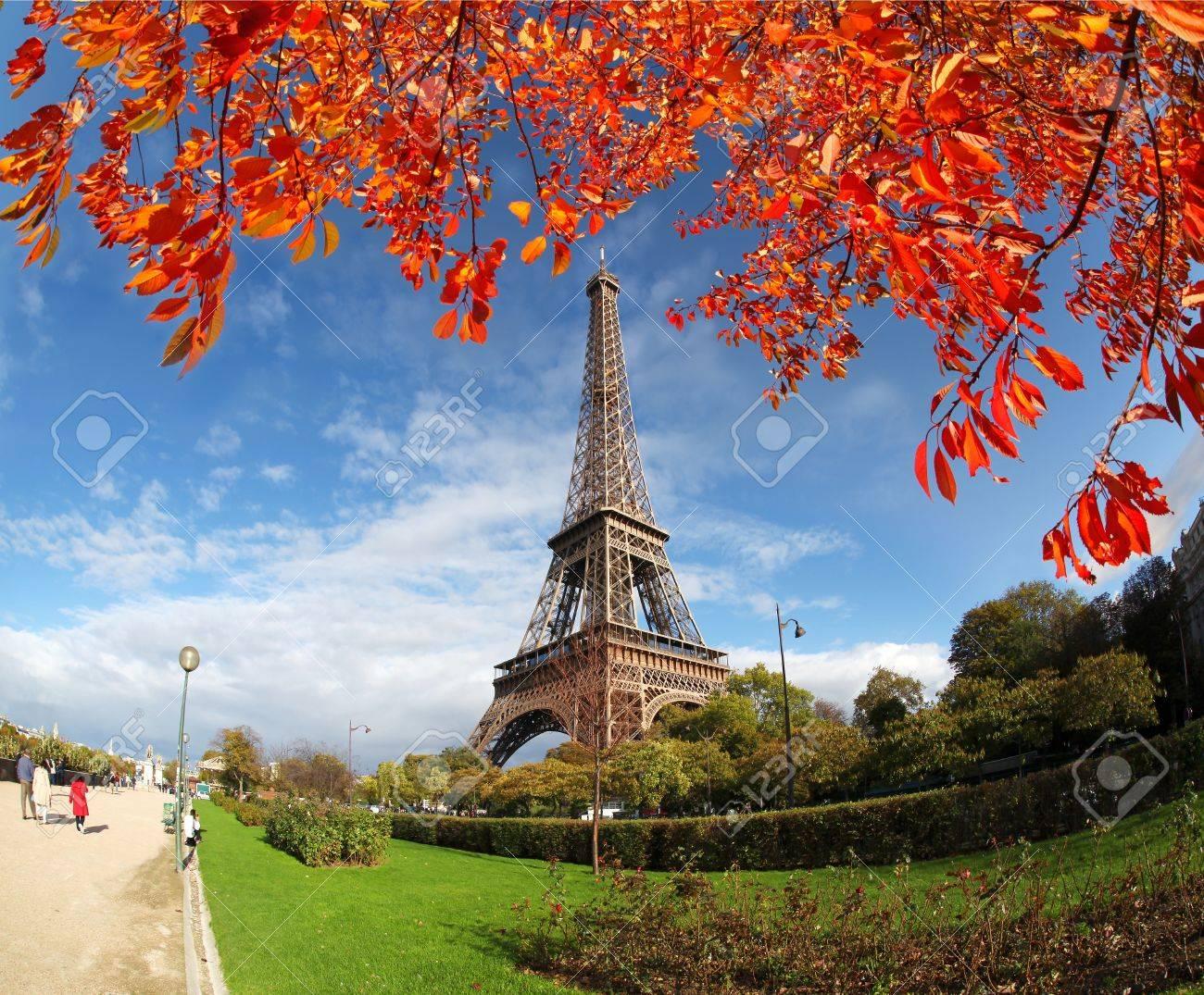 Eiffel tower against autumn tree in Paris, France - 15987037