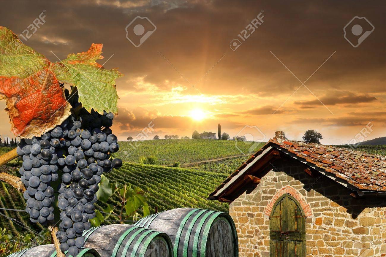 Chianti vineyard landscape in Tuscany, Italy - 17773372