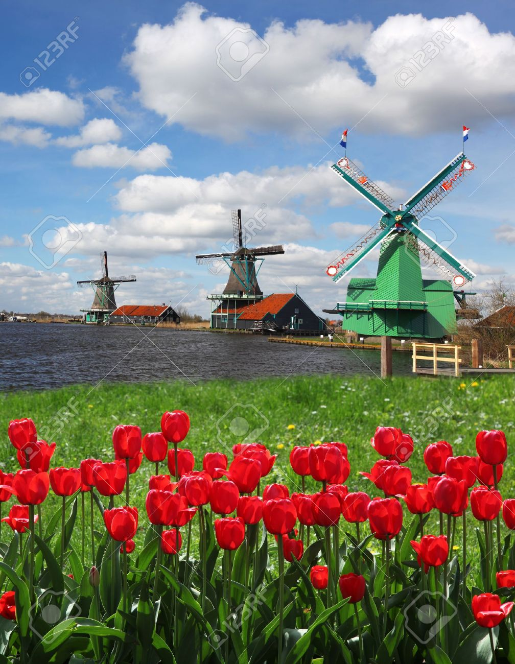 Traditional Dutch windmills with red tulips close the Amsterdam, Holland - 19583853