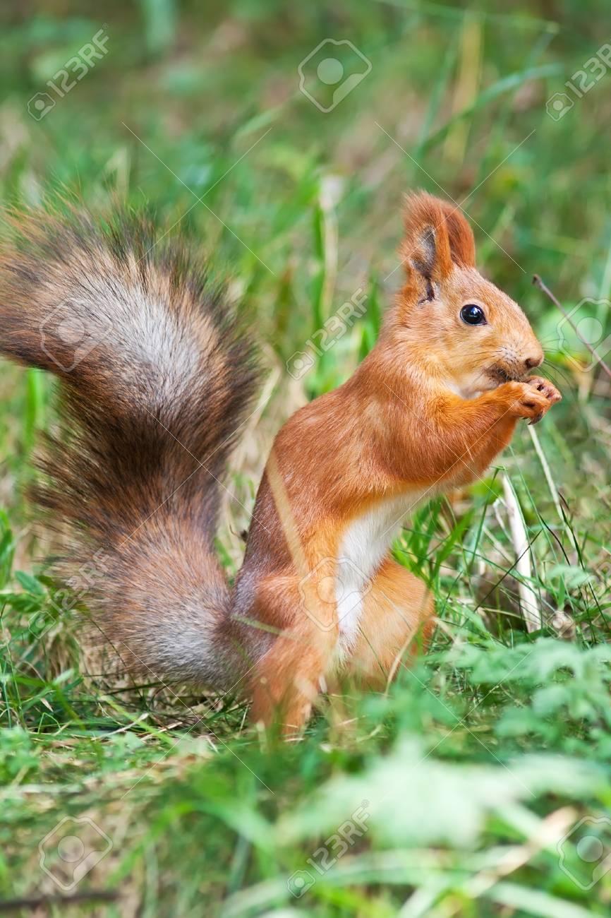 Squirrel adornment of the Caucasus in Russia Stock Photo - 17804471