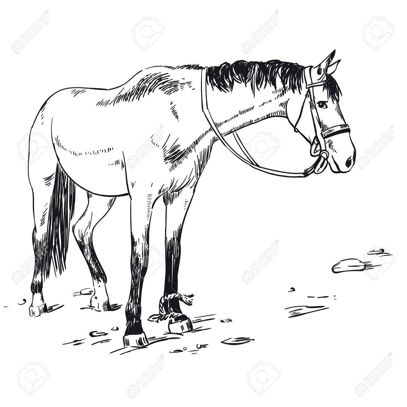 Vector Image Of An Horse On White Background Outline Sketch Royalty Free Cliparts Vectors And Stock Illustration Image 87626834