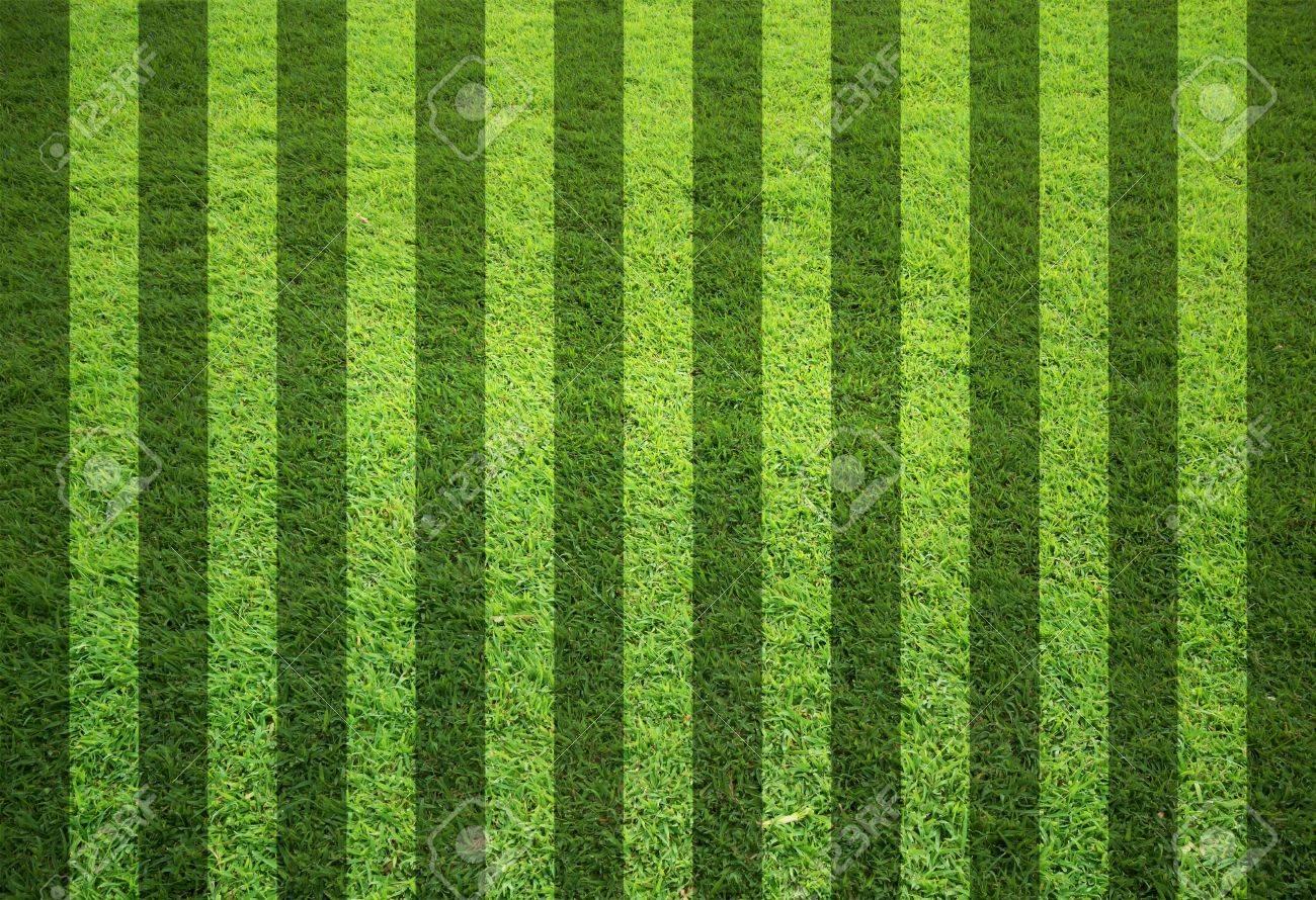 blank grass field in stripe form Stock Photo - 9788955