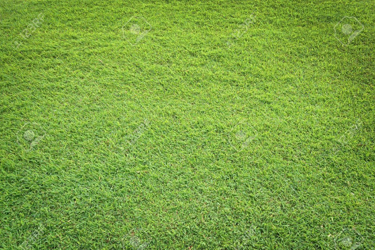 pattern of green grass field Stock Photo - 9921703