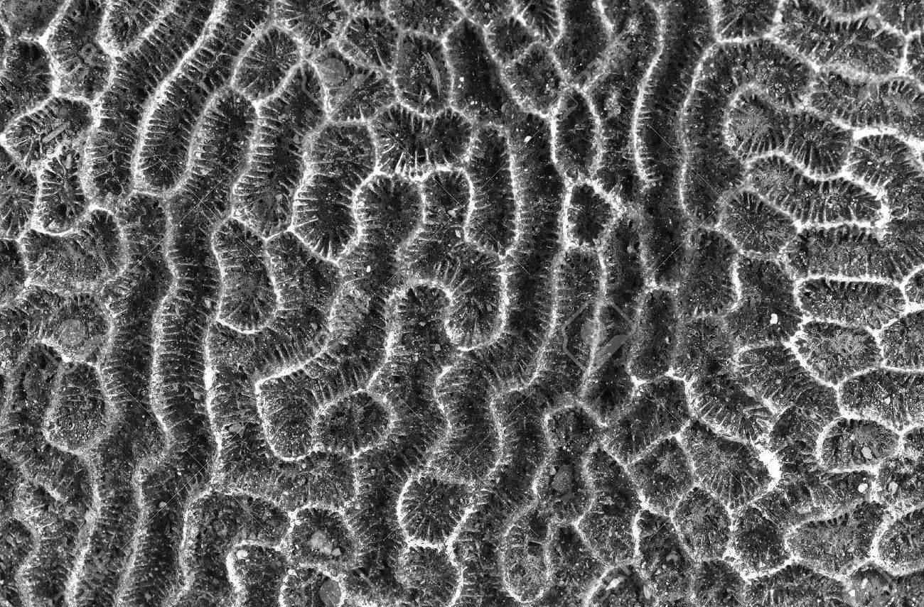 close up view of hard coral texture detail for genearl background use. Stock Photo - 10213306