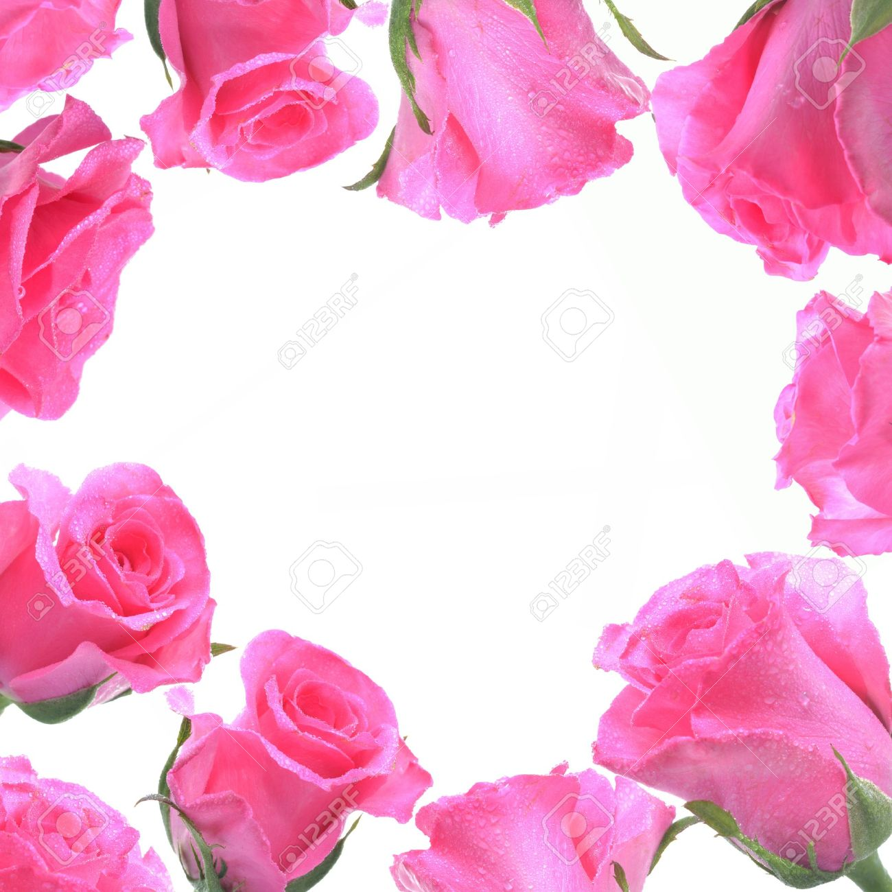 Frame From Pink Rose For Love Concept. Stock Photo, Picture And ...