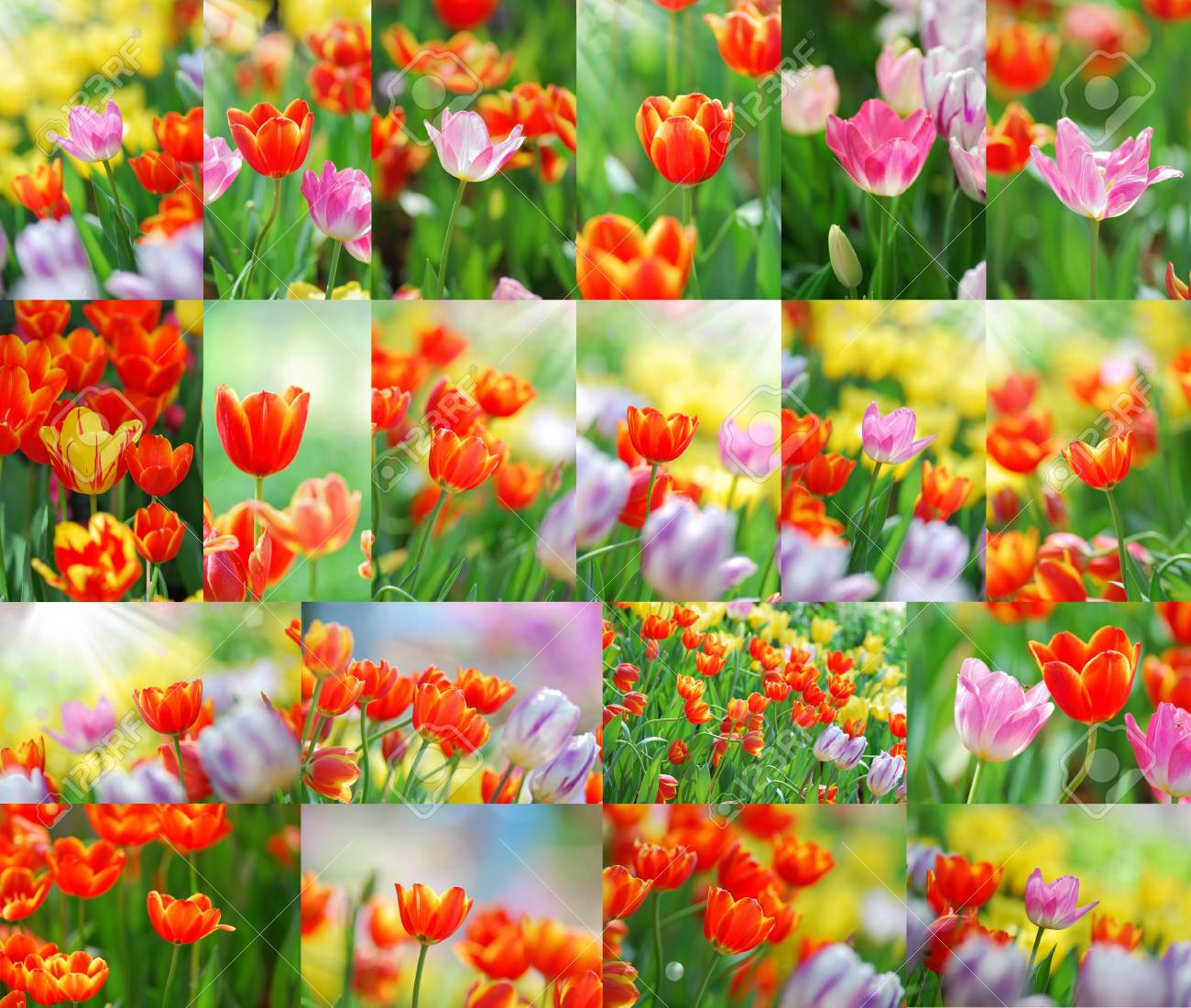 Set of close up tulip with shallow depth of focus. Stock Photo - 12063138