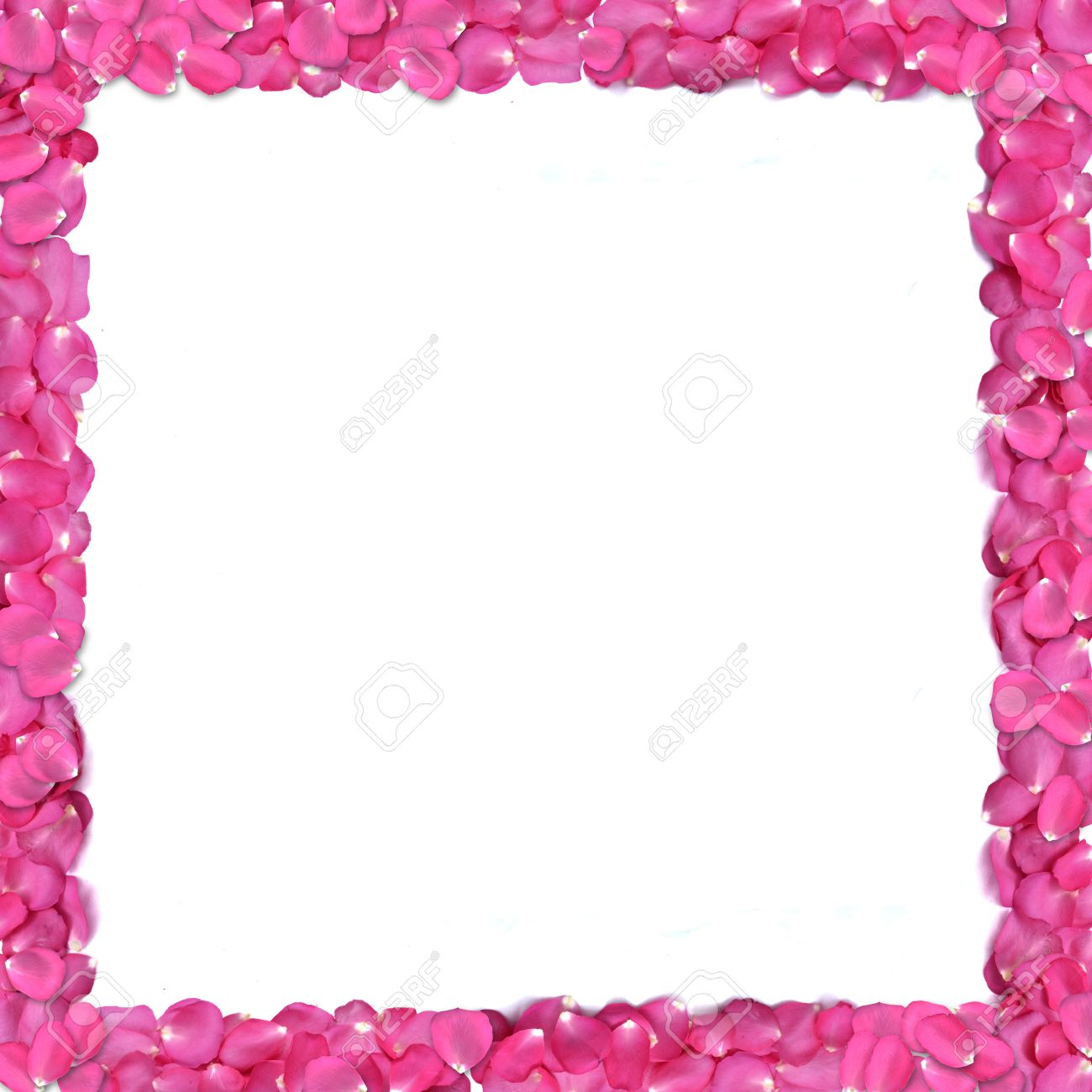 Square shape frame from rose petals on white background. Stock Photo - 12236458