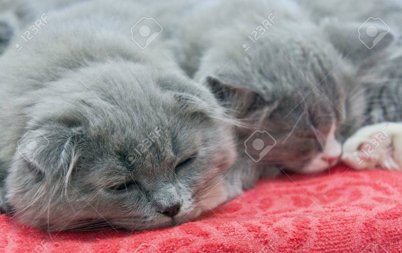 Two Cute Kittens Sleeping Bed Cover Stock Picture And