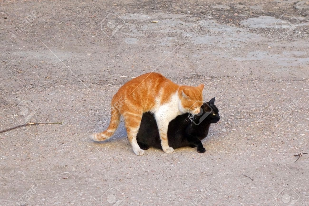 Pic of cat having sex