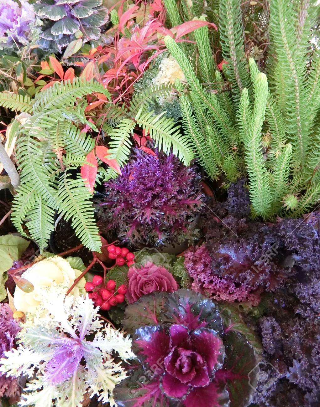 New Years Foliage >> Cloloful Foliage Plants Planted For New Year Stock Photo Picture