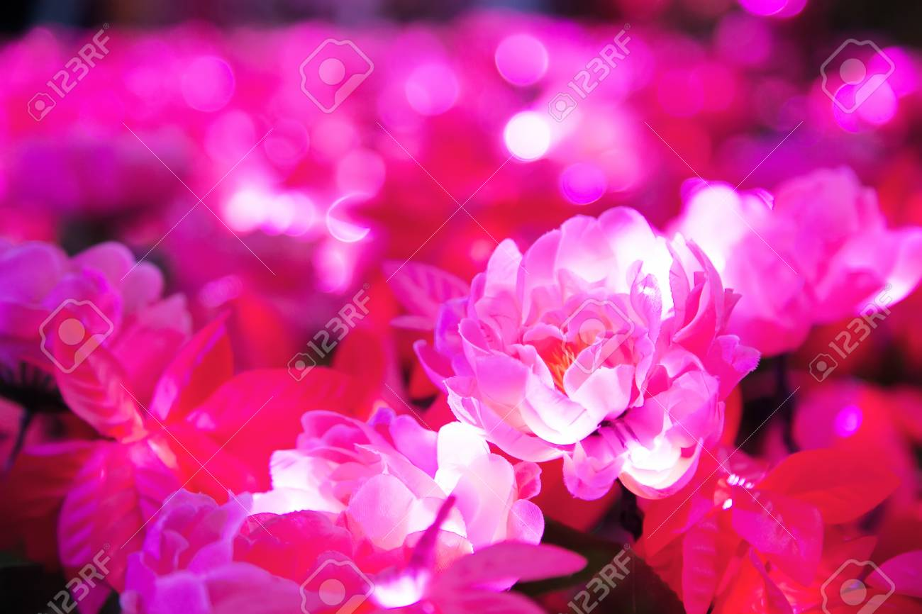 Blurred Of Pink Flower With Round Shape Illuminated Led Lighting
