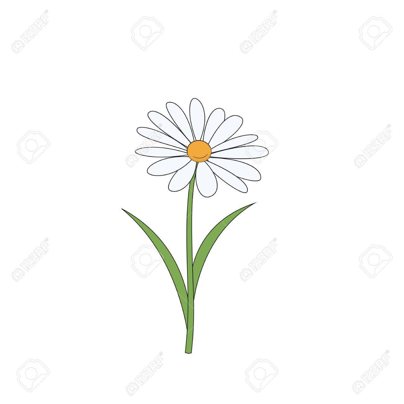 Cartoon daisy. Simple flower on white background. Vector illustration. - 76081580