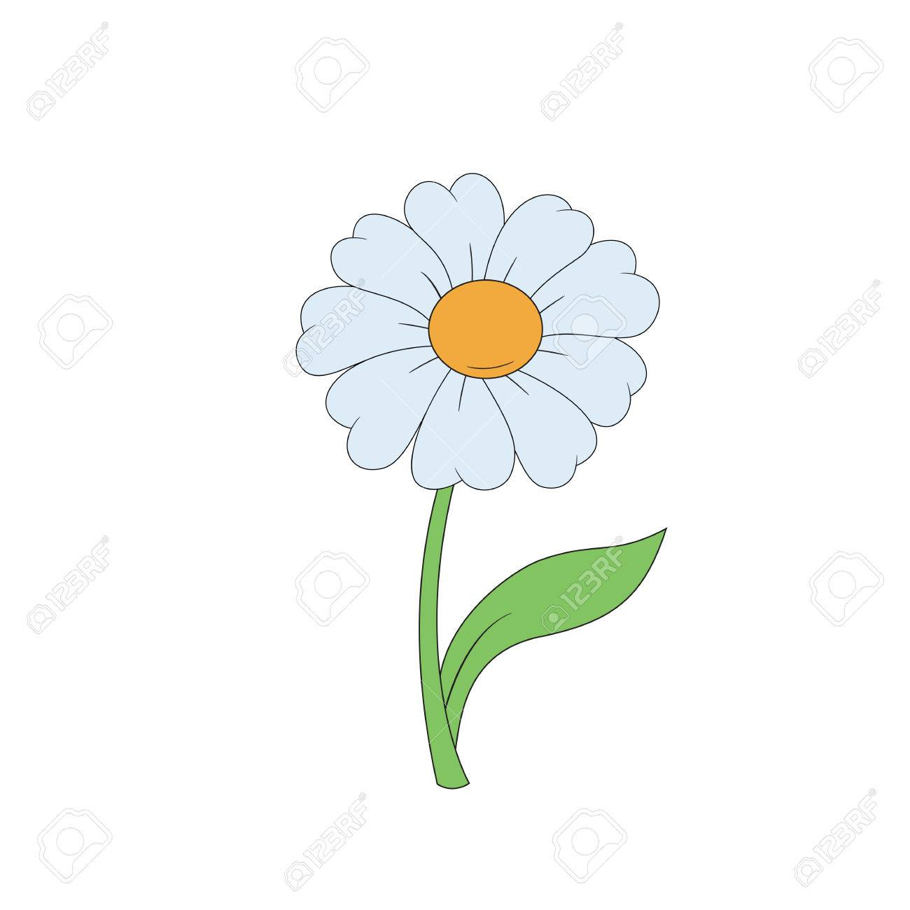 Cartoon Daisy Simple Flower On White Background Vector