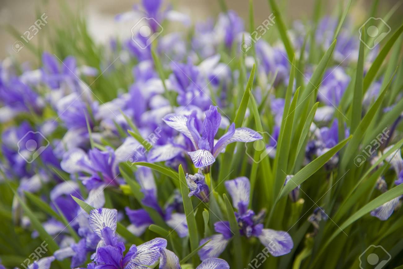 Beautiful Wild Flowers In The Steppes Of Buryatia Flowers