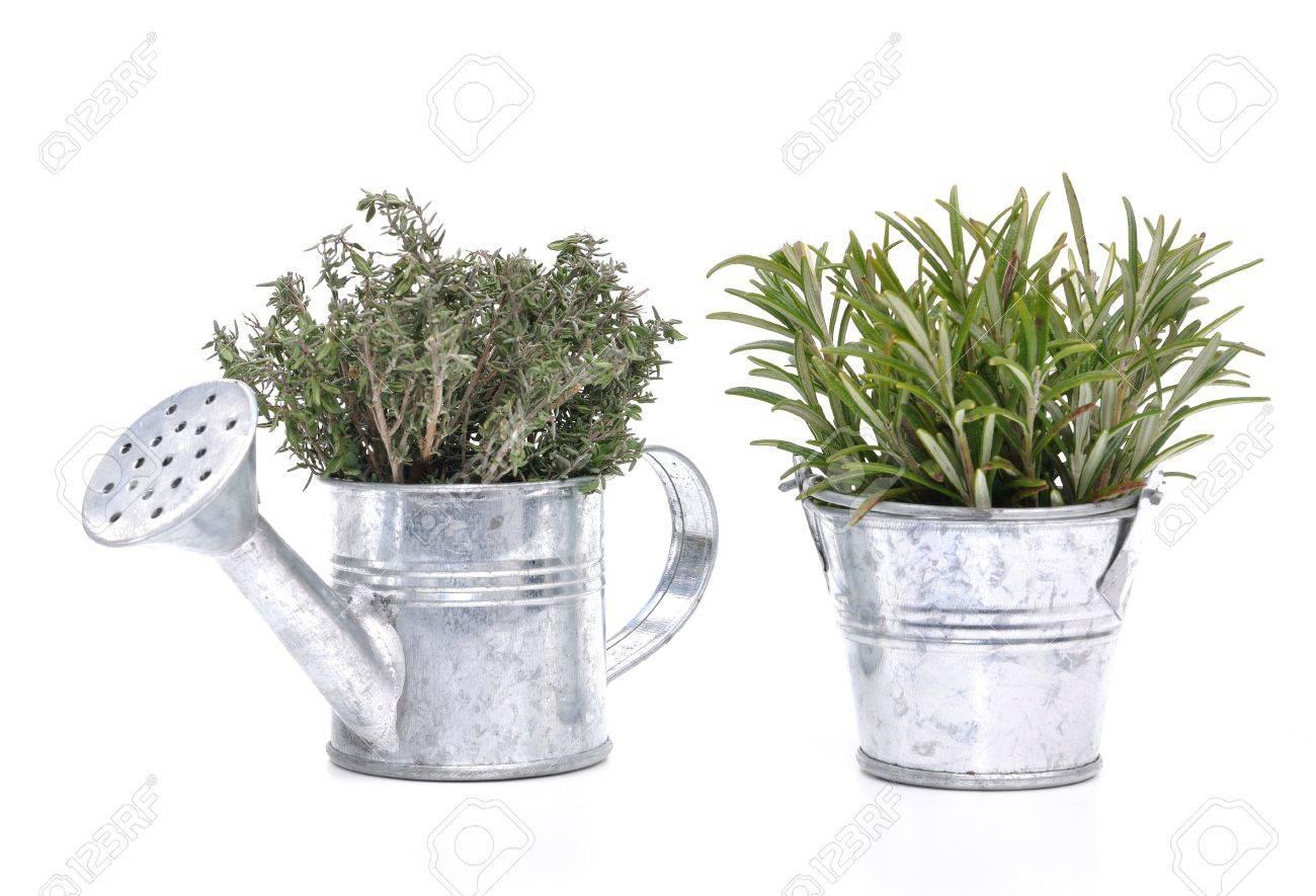 Bouquets De Thym Et De Romarin Dans Des Petits Pots Decoratifs En