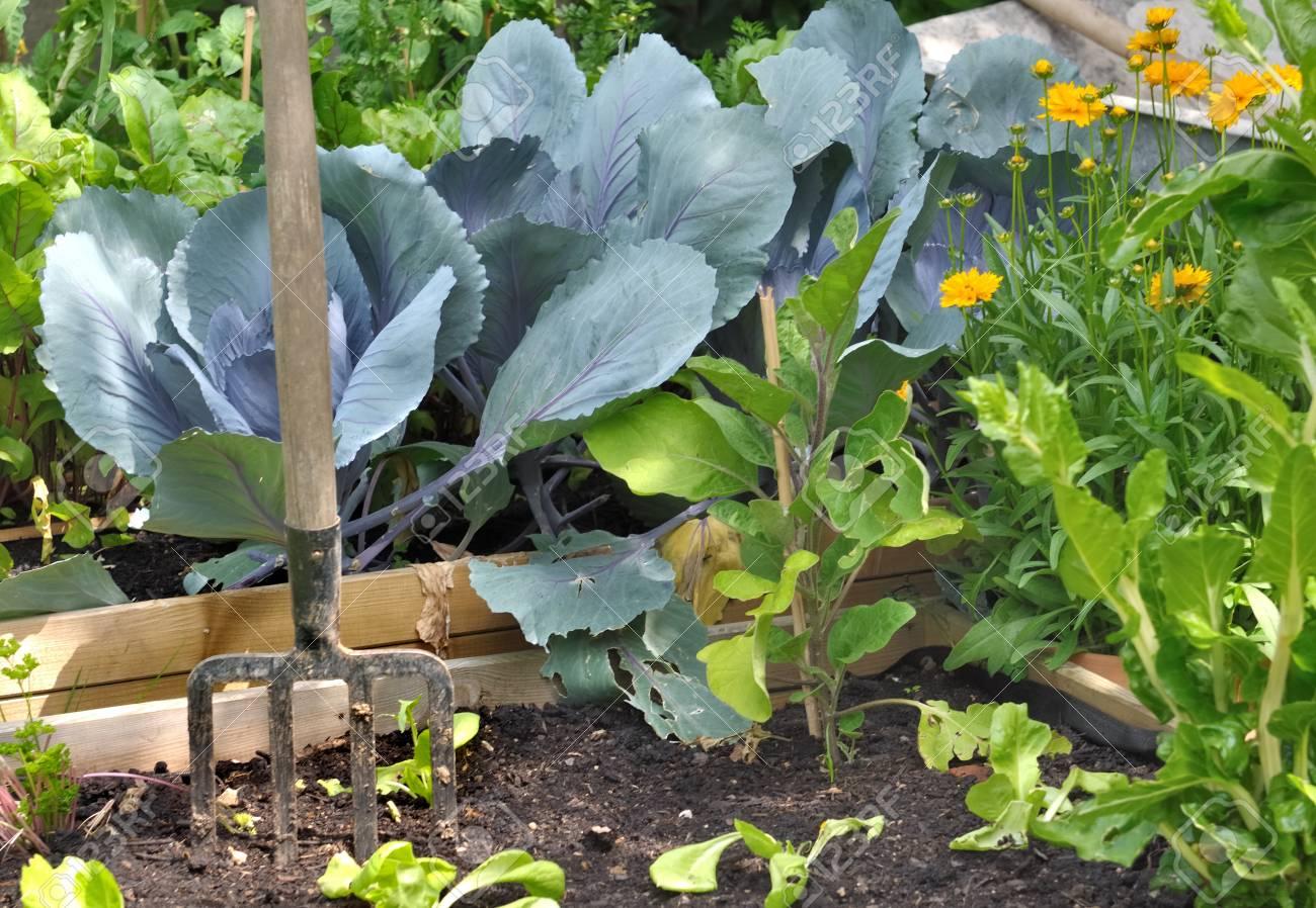 Légumes Dans Le Jardin Avec Des Outils De Jardinage Banque D\'Images ...