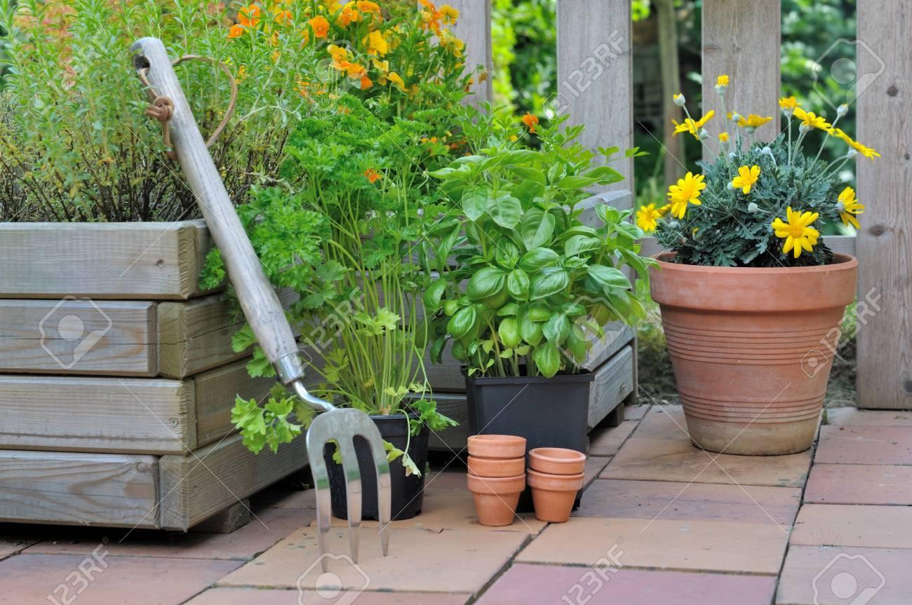 Plantes Aromatiques Sur Terrasse différentes plantes en pot sur une terrasse aromatiques