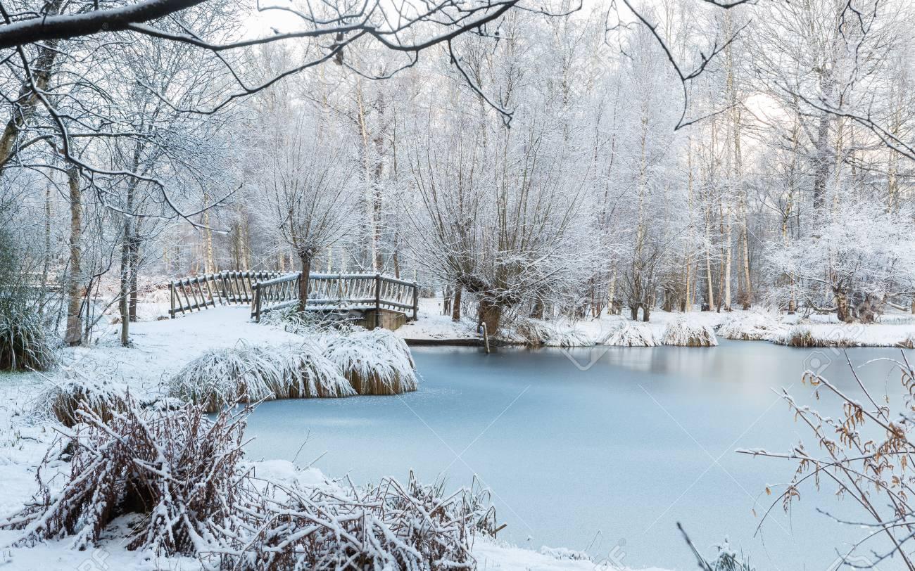 Scene D Hiver Au Jardin Botanique Montrant Un Pont Sur De L Eau