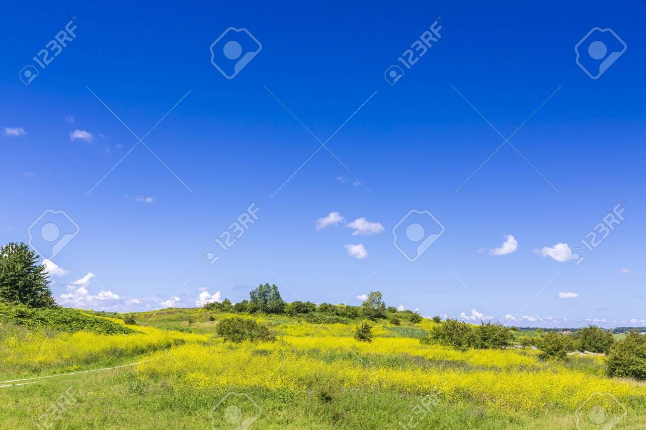 Beautiful yellow colored fields under a blue sky in Summer season. Buytenpark Zoetermeer, the Netherlands - 153391307