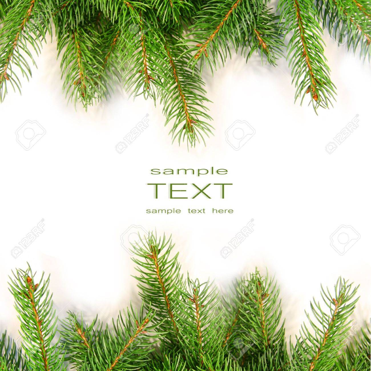 Pine branches isolated on white background Stock Photo - 3733846