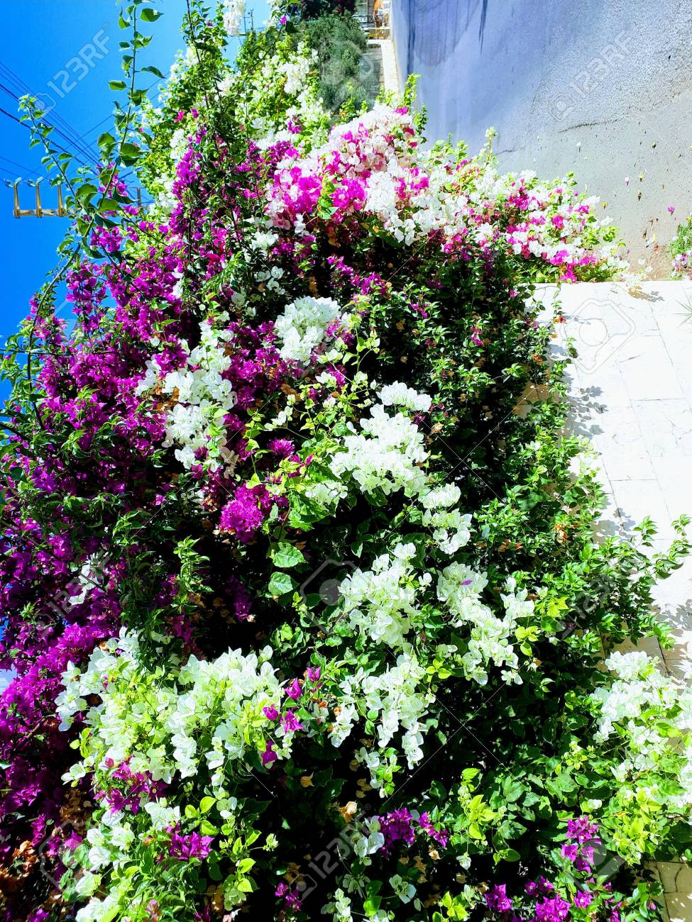 A Flower Tree That Hanging By The Wall And Filled With Pink And