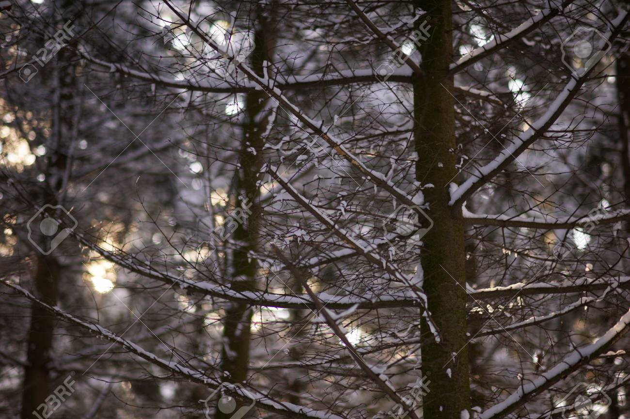 dark winter forest stock photo picture and royalty free image
