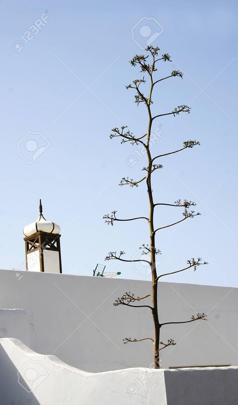 Arquitectura in coast of Lanzarote, Canary Islands Stock Photo - 21815057