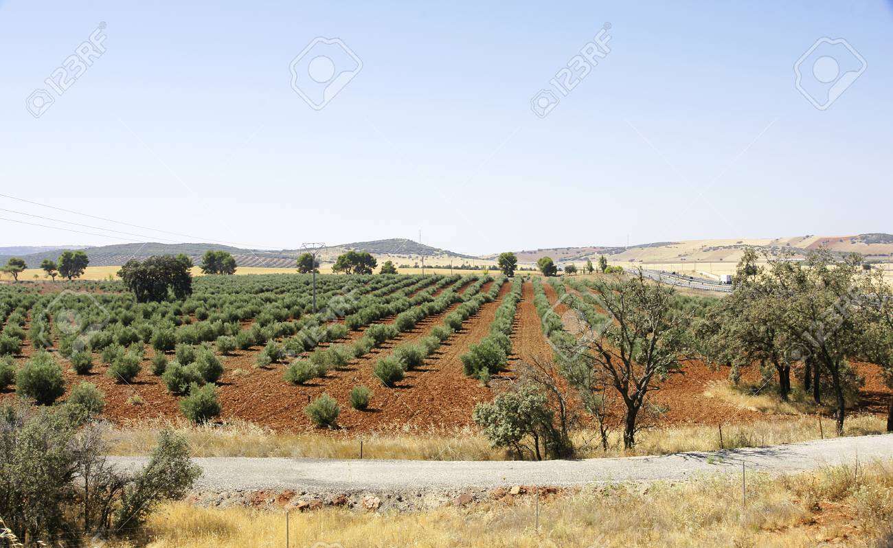 Planting Fruit Trees Stock Photo Picture And Royalty Free Image Image 33666291