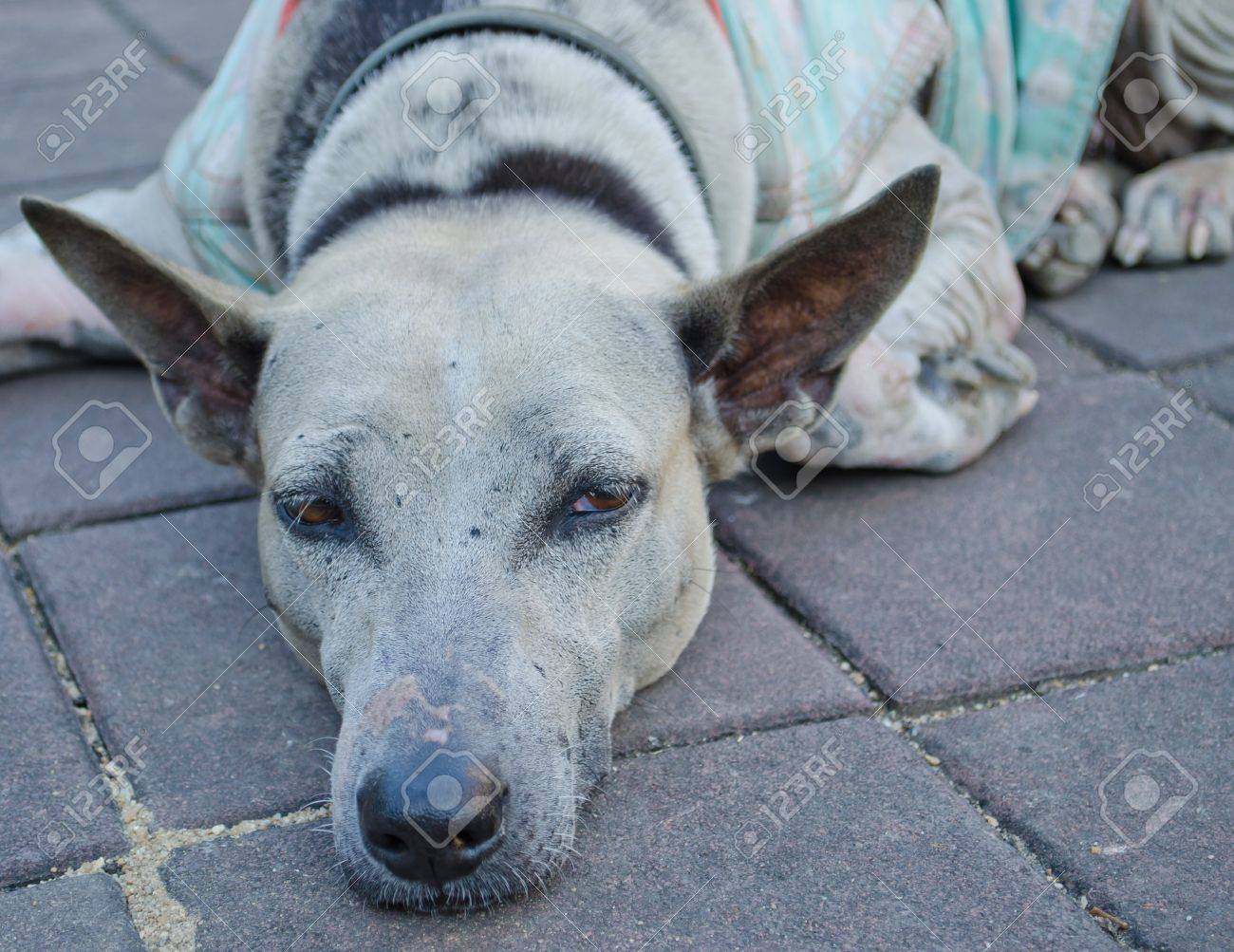 The neglected or abandoned Old  sad dog in the temple Stock Photo - 12184136