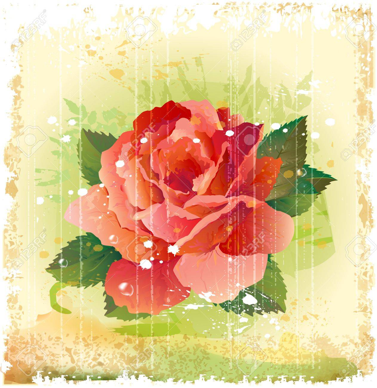 vintage illustration of red rose Stock Vector - 14093450