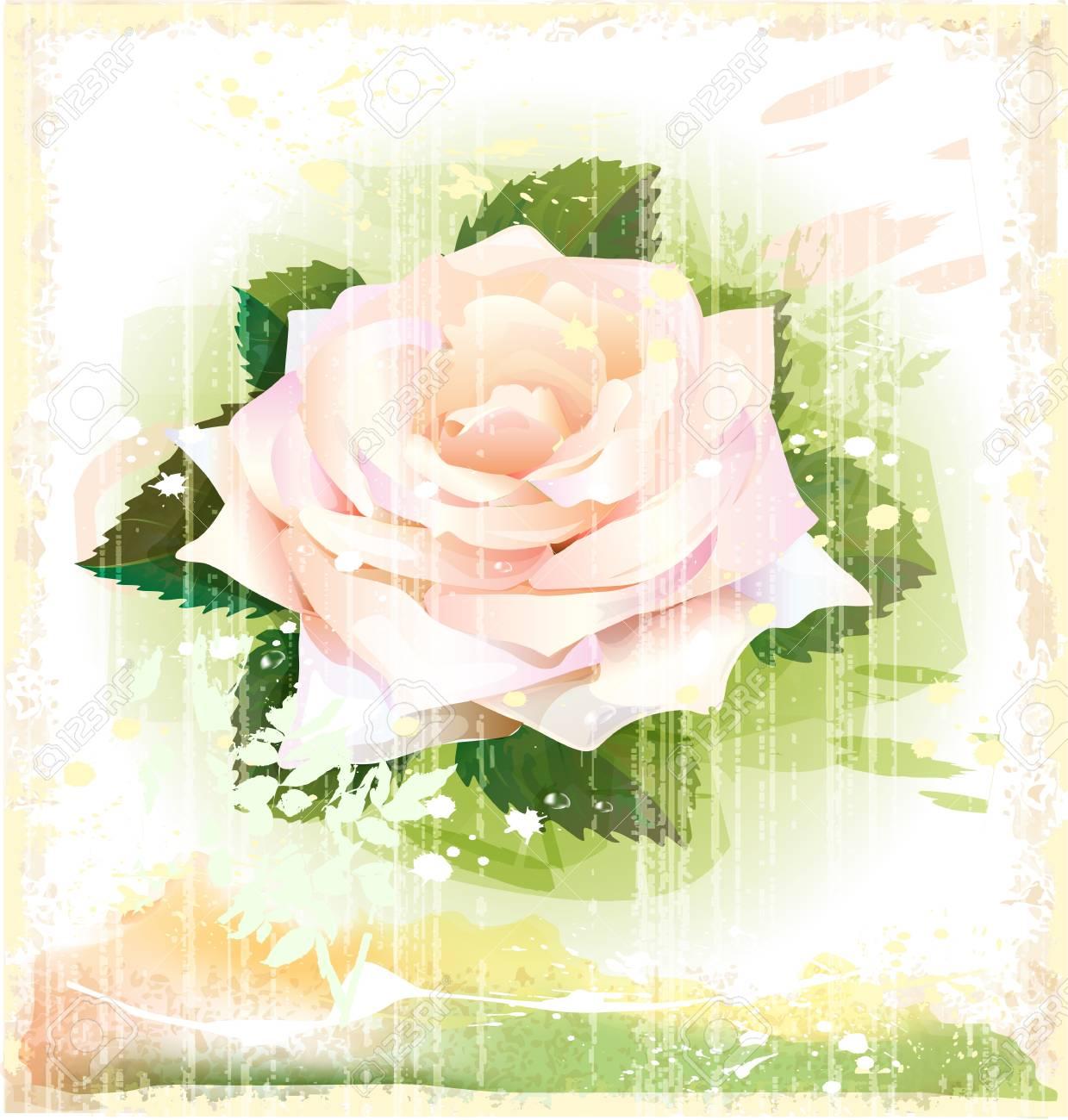 vintage illustration of pink rose Stock Vector - 14093433