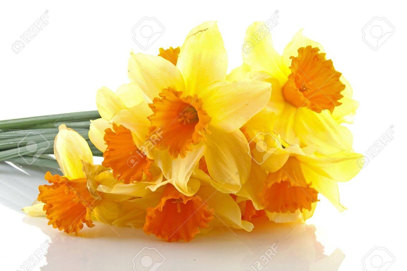 Banque d\u0027images , Jaune avec des fleurs jonquilles orange sur fond blanc