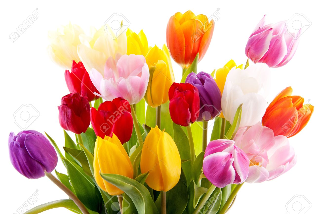 Bouquet of colorful tulips over white background Stock Photo - 10875380
